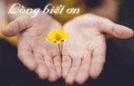 Chúa nhật XXVIII Thường niên năm C: Biết ơn