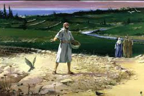 Chúa nhật XV Thường niên năm A: Hạt giống Lời Chúa