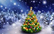 Cây Noel