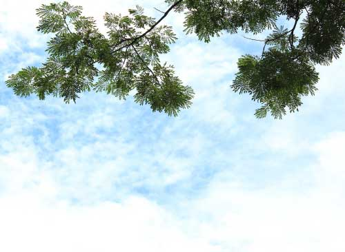 Ngắm bầu trời
